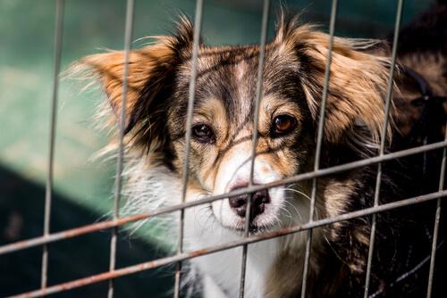 Perro abandonado entre rejas