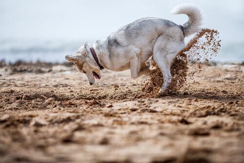 Cómo evitar que el perro esconda comida y juguetes