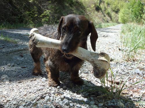 Perro con hueso en la boca