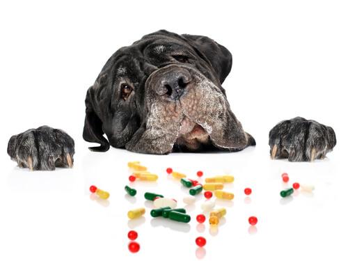 Perro intenta ingerir medicamentos