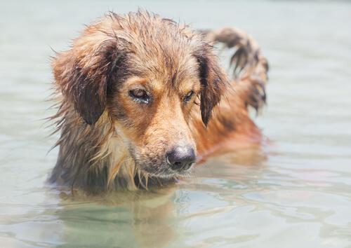 Perro metido en el agua de mar