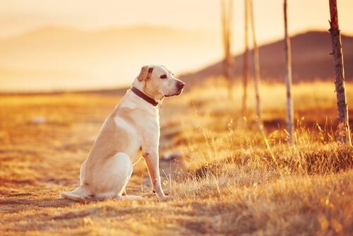 Perro en la puesta de sol