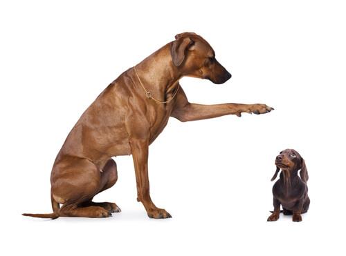 Perro de raza grande y pequeña
