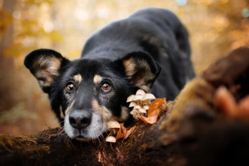 Perro tumbado con hongos