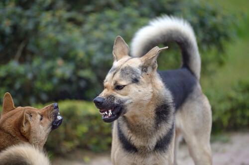 Perros y comportamiento territorial: ¿a qué se debe?