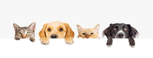 Perros y gatos asomados