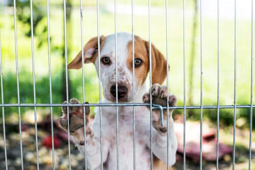 Cómo elegir la residencia canina más adecuada