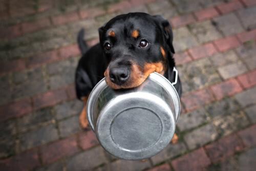 ¿Cuál es la dieta más adecuada para el rottweiler?
