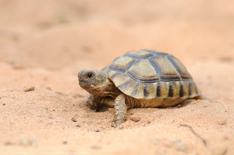 Las tortugas de España