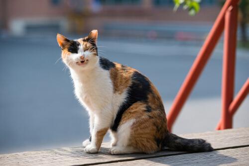 Tos crónica en gatos: ¿qué hacer?
