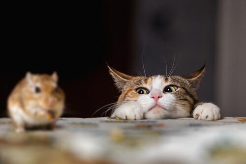 Actitud de caza en los gatos