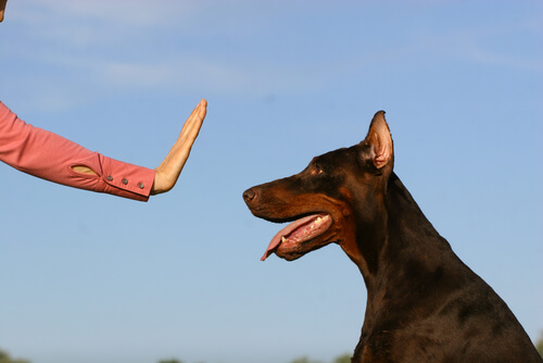 A well trained dog does not have to be aggressive.