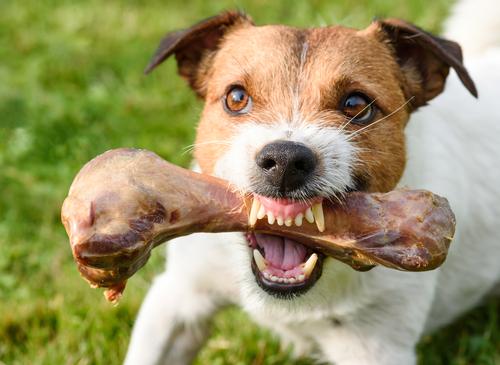 Agresión en los perros relacionada con la comida