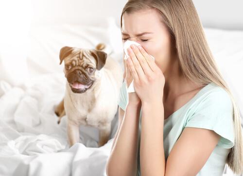 Alergia a perros por dormir en la misma cama