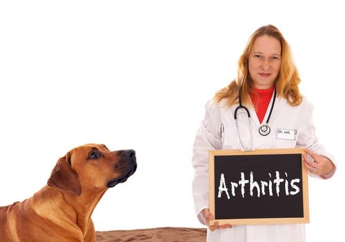¿Sirven los collares de cobre en la artritis en los perros?