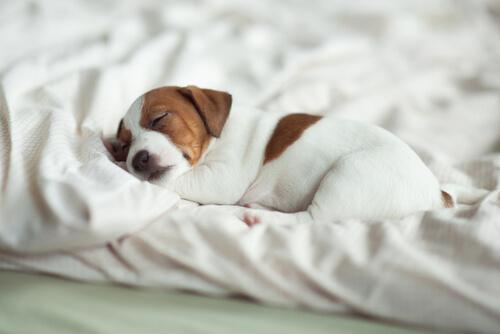 Ejemplo de ayudar a un cachorro a dormir toda la noche