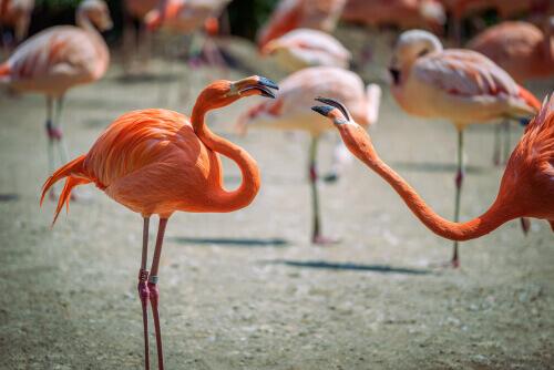 Competitividad entre especies como flamencos