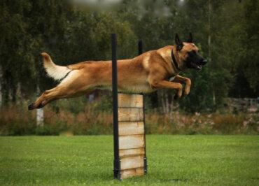 Importancia del ejercicio en perros