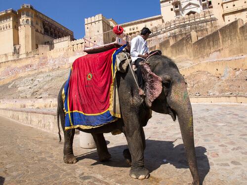 Elefantes en cautividad en India