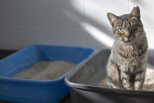 Enseñando a un gato que no usa su caja de arena