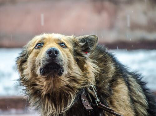 Fobias más comunes en perros