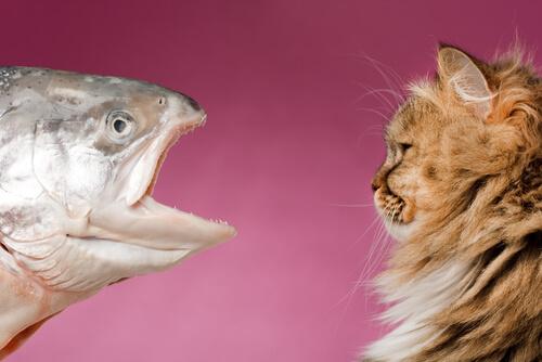 Alimentar a tu gato con pescado: ¿es bueno?