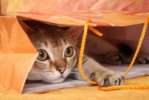 ¿Cómo motivar a un gato a jugar? 7 trucos fáciles