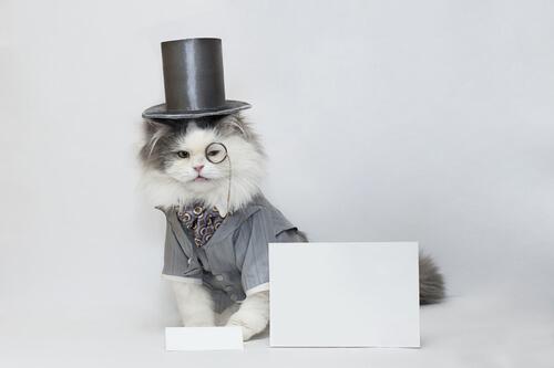 Gato como estrella mediática