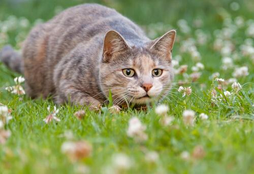 Gato localizando a una presa