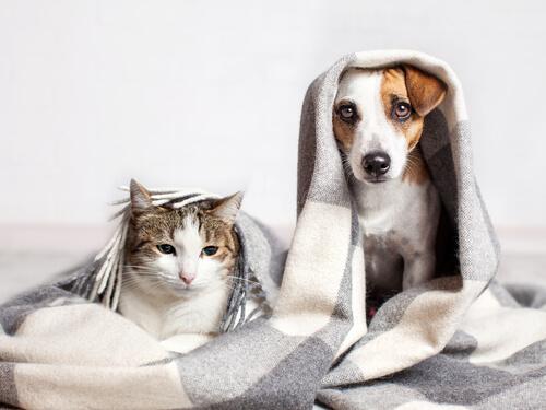Gatos que piensan como los perros