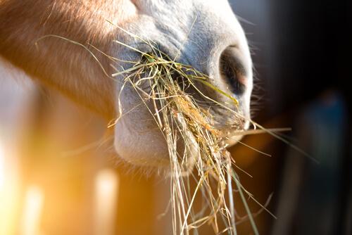 ¿Cómo cambiar la nutrición de un caballo de una manera saludable?