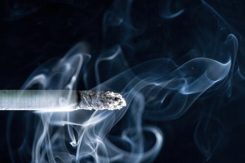Consecuencias del humo de cigarrillo en los perros