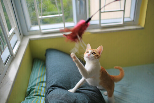 Motivar gato a jugar