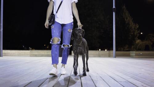 Mujer encuentra un perro en la calle