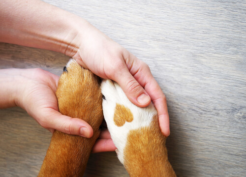 Cómo limpiar las patas del perro después del paseo