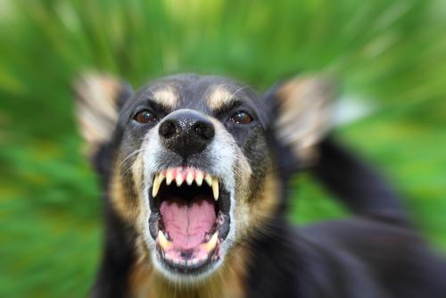 Mitos sobre la agresividad canina
