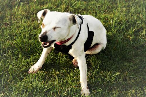 Causas de los estornudos en los perros