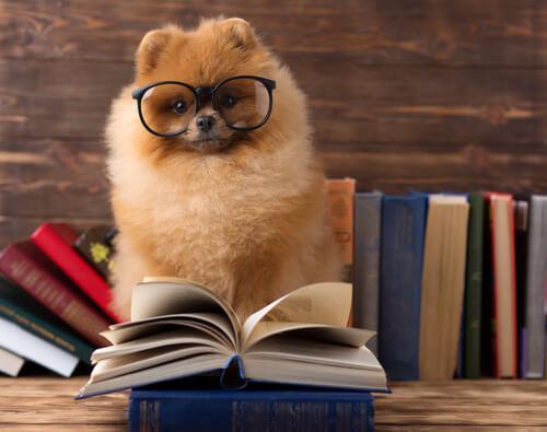 Es necesario informarse sobre educación en animales.