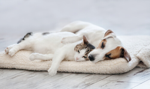 Dog and cat rest together