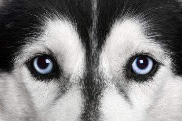 Perros y humanos: una amistad ancestral