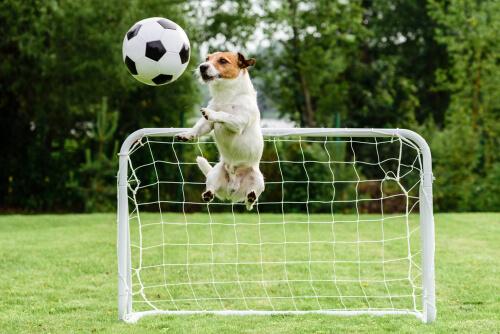 Perro jugando al fútbol