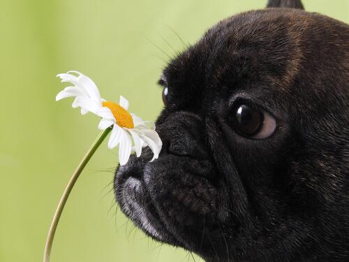 El polen es uno de los principales alérgenos.