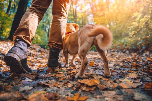 Razas de perros aptos para el senderismo