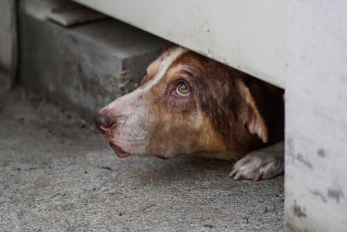 Perros se esconden asustados