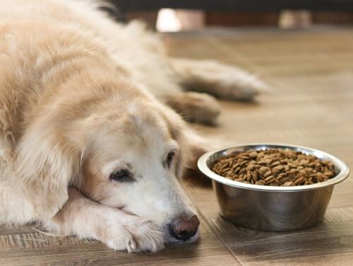 Perros viejos sin ganas de comer