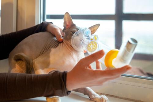 Problemas respiratorios en gatos: causas y síntomas