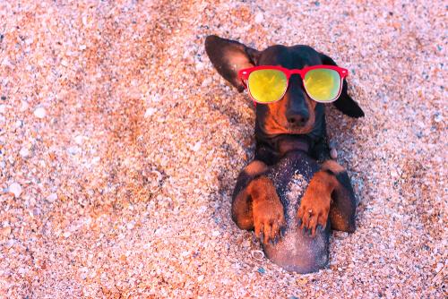 Consejos para proteger a un perro del sol