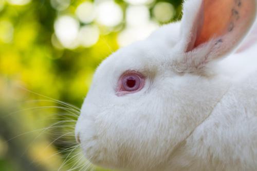 Rostro de un conejo