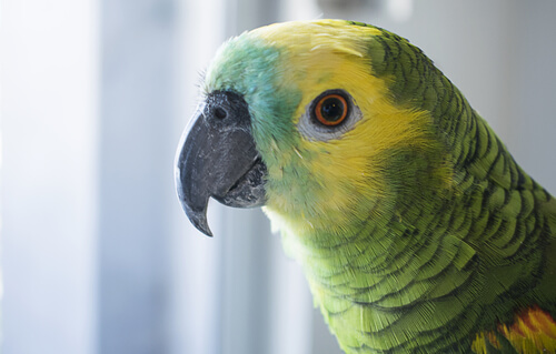 Face of a parrot