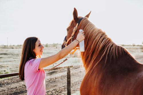 Tratamiento de la tiña en caballos